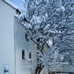 Snow-25012012_IMG_1500