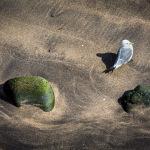 Seagull-01072012_15A3083