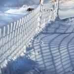 Snow-12032011_7631
