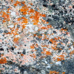 Colourful pattern og Granite